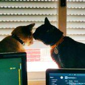 ¡Mis gatos Canelo y Amigo!